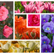 Flowers Collage — Stock Photo #9359840