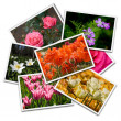 Flower postcards — Stock Photo