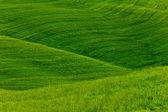 Green Fields Background — Stock Photo
