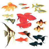 рыбки аквариумные — Cтоковый вектор