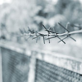 Strands of barbed wire against gray background — Stock Photo
