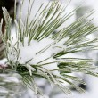 Christmas evergreen spruce tree with fresh snow — Stock Photo #8847548