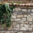 Ivy Climbing The Old Wall — Stock Photo #9882923
