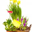 Spring flowering plants — Stock Photo