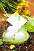 гнезда с яйцами — Стоковое фото