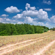 Stock Photo: Hot summer day. Landscape