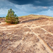 Stock Photo: Lone pine on hill 2