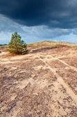 Pinheiro solitário na colina 2 — Foto Stock