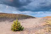 Prachtige landschap van de steppe — Stockfoto