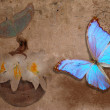 Blue butterfly and white lily — Stock Photo