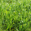 Background from grass — Stock Photo