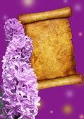 Liliowy hiacynt — Zdjęcie stockowe
