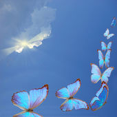 Blue butterflies — Stock Photo
