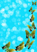 Butterflies on blue background — Stock Photo