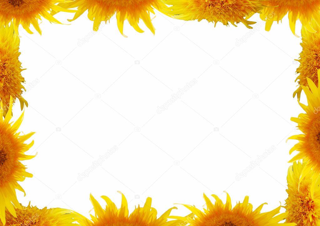 Sunflower Frame Frame From Sunflower on White