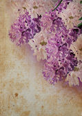 Bouquet violet hyacinth crunge — Stock Photo