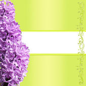 Frame of hyacinth — Stock Photo