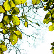 Green leaves on tree in forest — Stock fotografie #9141303