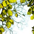 Стоковое фото: Green leaves on tree in forest