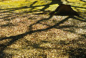 Abandon stump with tree shadow — Stock Photo