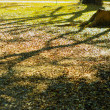 Stock Photo: Abandon stump with tree shadow