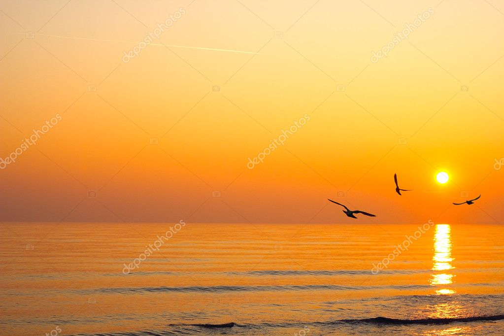Sunrise over the sea birds in the sky plane — Stock Photo #8341111