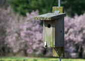 BIrd House and Magnolias — Stock Photo