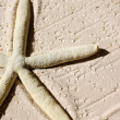 Starfish in the sand - Stock Photo