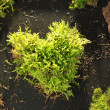 Moss heart — Stock Photo #8178613