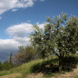Provencal Landscape — Stock Photo