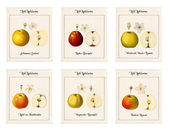6 plates with illustrations of apple varieties — Stock Photo