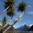 Stock Photo: Palm trees in Milford Sound