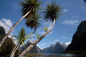 Palm trees in the Milford Sound — Stock Photo