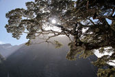 Old tree in the Milford Sound — Stock Photo