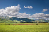 Green Farmland near Mossburn between Queenstown and Te Anau — Stock Photo