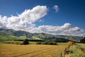 Farmland near Mossburn between Queenstown and Te Anau — Stock Photo