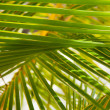 Palm branches background - Stock Photo