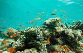 Lagoon with fishes and corals — Foto Stock