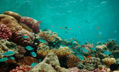 The reef — Stock Photo