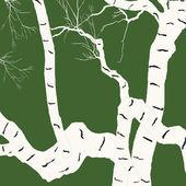 Aging birch — Stock Vector