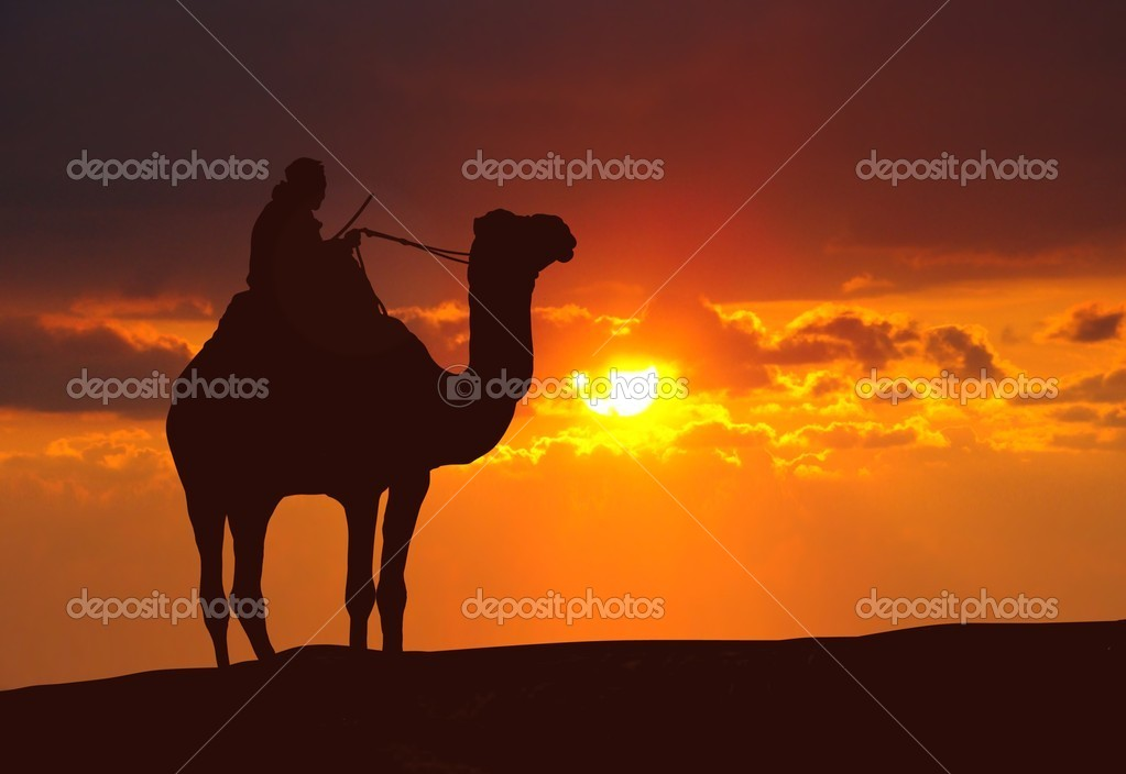 Camel on desert during sunset — Stock Photo © razihusin ...