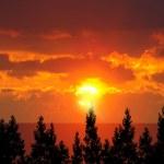 amanecer y árboles forestales — Foto de Stock