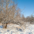 Winter landscape — Stock Photo #8307844