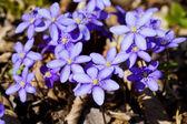 Flower glades — Stock Photo