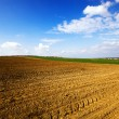 Royalty-Free Stock Photo: Plowed field