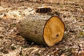 Deforestation — Foto de Stock