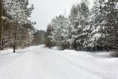 Road to wood (winter) — Stockfoto