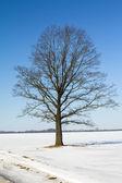 Boom (winter) — Stockfoto