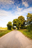 Road (summer) — Stock Photo