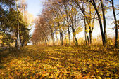 Trees in the autumn — Stock Photo